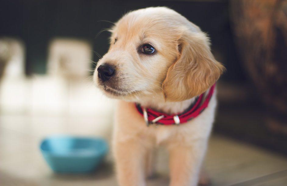W Nowej Soli wstrzymano adopcję zwierząt na święta