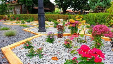 W Nowej Soli powstał pierwszy ogród deszczowy